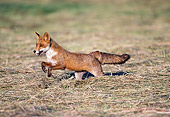 WLD 11 GL0003 01