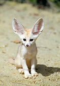 WLD 11 GL0004 01