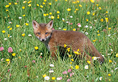 WLD 11 GL0005 01