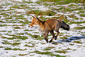 WLD 11 GL0009 01