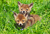 WLD 11 GL0010 01