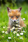 WLD 11 GL0013 01