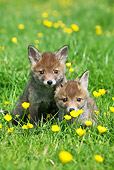 WLD 11 GL0016 01