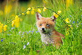 WLD 11 GL0017 01