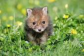 WLD 11 GL0023 01