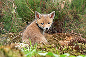 WLD 11 GL0025 01