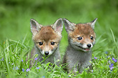 WLD 11 GL0026 01
