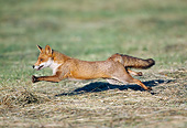 WLD 11 GL0028 01