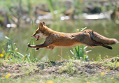 WLD 11 GL0029 01