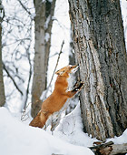 WLD 11 JZ0001 01