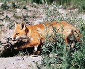 WLD 11 JZ0002 01