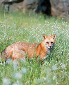 WLD 11 JZ0003 01