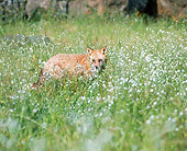 WLD 11 JZ0004 01