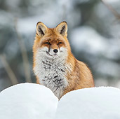 WLD 11 KH0007 01