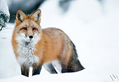 WLD 11 MC0002 01
