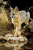 WLD 11 MC0003 01