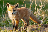WLD 11 NE0006 01