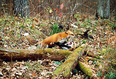 WLD 11 RK0010 02