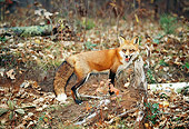 WLD 11 RK0020 10