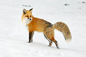 WLD 11 TL0017 01