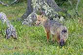 WLD 11 WF0001 01