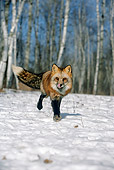 WLD 11 WF0002 01