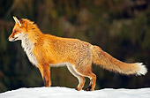 WLD 11 WF0003 01