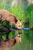 WLD 11 WF0006 01