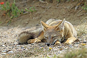 WLD 11 WF0009 01