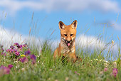 WLD 11 KH0002 01
