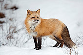WLD 11 KH0004 01