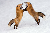 WLD 11 KH0005 01