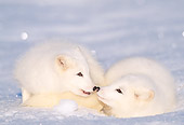 WLD 11 LS0001 01