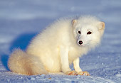 WLD 11 LS0002 01