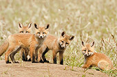 WLD 11 NE0001 01