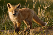 WLD 11 NE0002 01