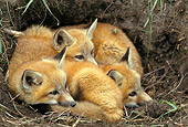 WLD 11 RF0006 01