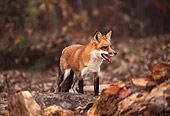 WLD 11 RK0002 01
