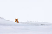 WLD 11 SK0001 01
