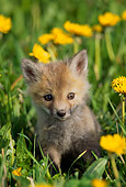 WLD 11 TL0001 01