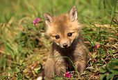 WLD 11 TL0003 01