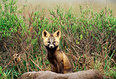 WLD 11 TL0004 01