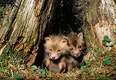 WLD 11 TL0006 01