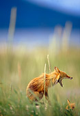 WLD 11 TL0007 01