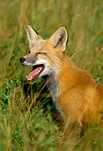 WLD 11 TL0008 01
