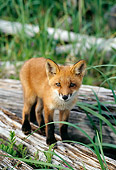 WLD 11 TL0010 01