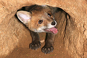 WLD 12 GL0001 01