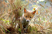 WLD 12 GL0003 01