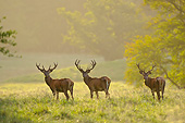 WLD 13 AC0018 01
