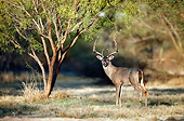 WLD 13 BA0004 01